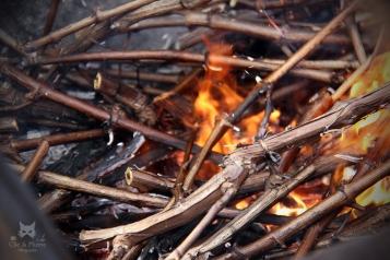 Sarments brûlant dans la brouette